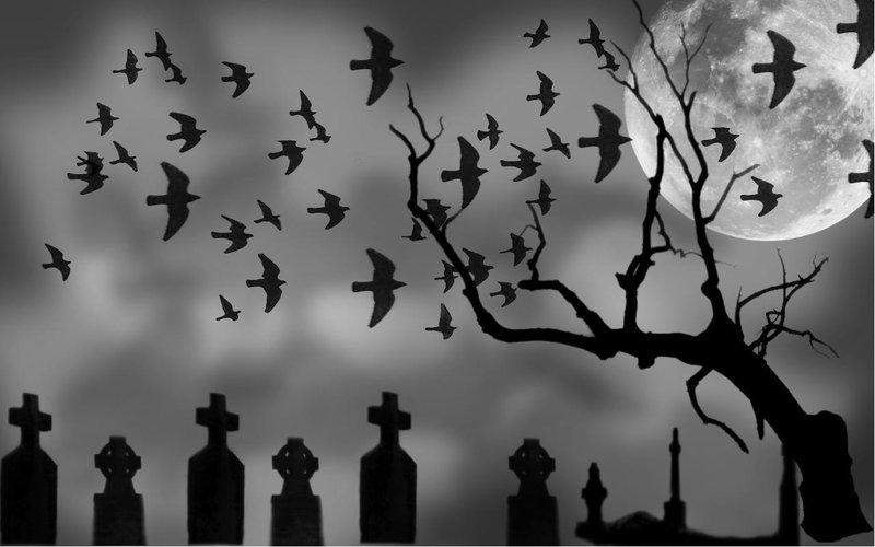 Bats flying over cemetery